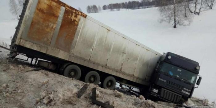 На трассе в Оренбургской области бросили пять цирковых белых тигров