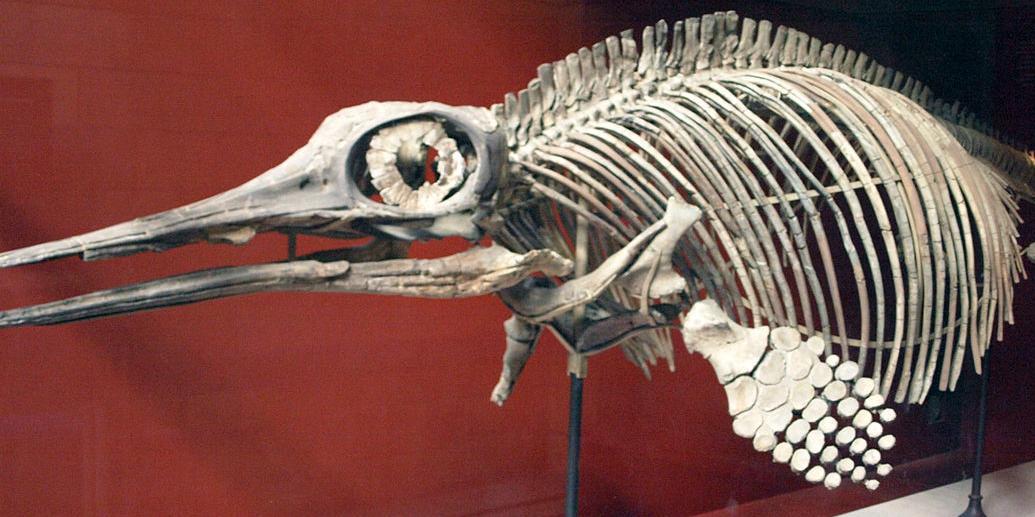 В России найден скелет жившего более 240 млн лет назад ихтиозавра