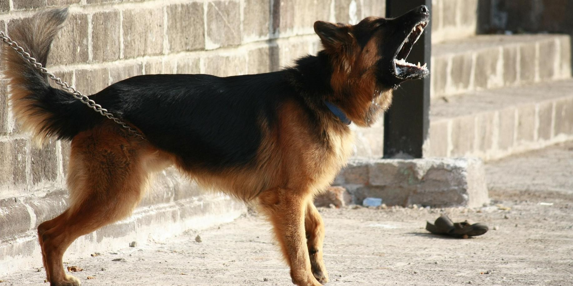 Владельцев крупных собак хотят обязать проходить кинологические курсы