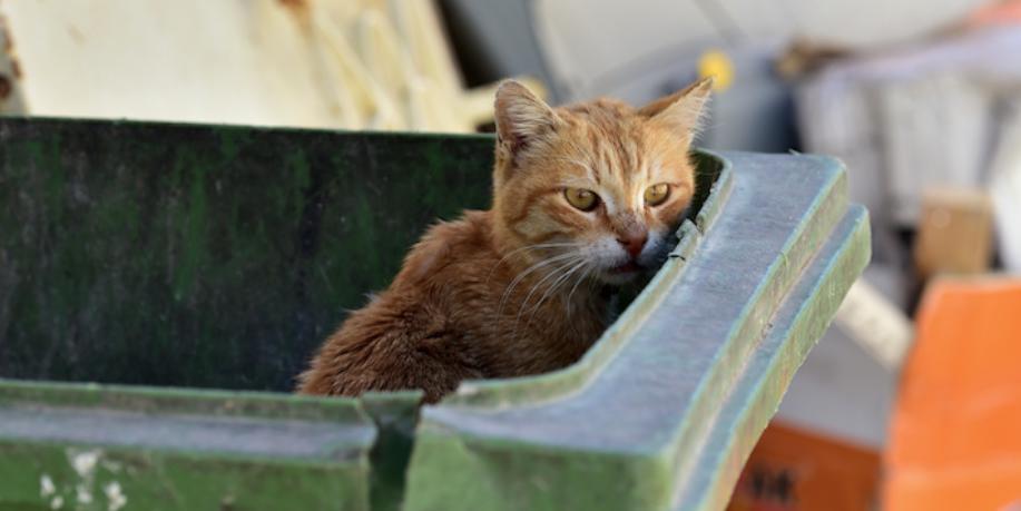 На улицы Чикаго выпустили тысячу кошек-убийц