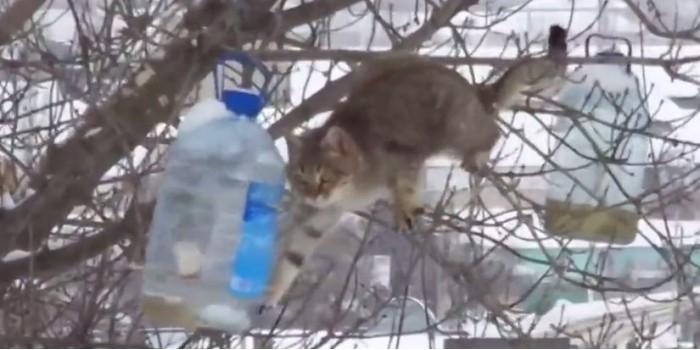 Под Воронежем засняли кота-экстремала, ворующего сало из кормушки для птиц