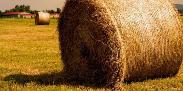 Россия начала экспорт сена в Северную Корею