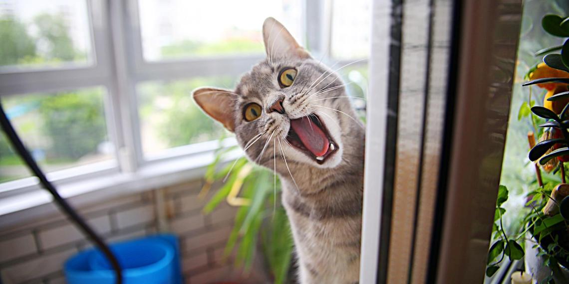 Кошка заперла на балконе собственную хозяйку. Женщину пришлось спасать МЧСникам