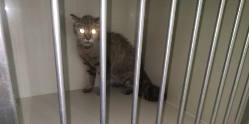 """""""Окрестили в клинике Ниндзя"""": кошка пробила головой потолок, убегая от хотевших ее стерилизовать ветеринаров"""