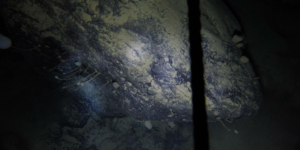 Ученые нашли неизвестных науке созданий во льдах Антарктиды