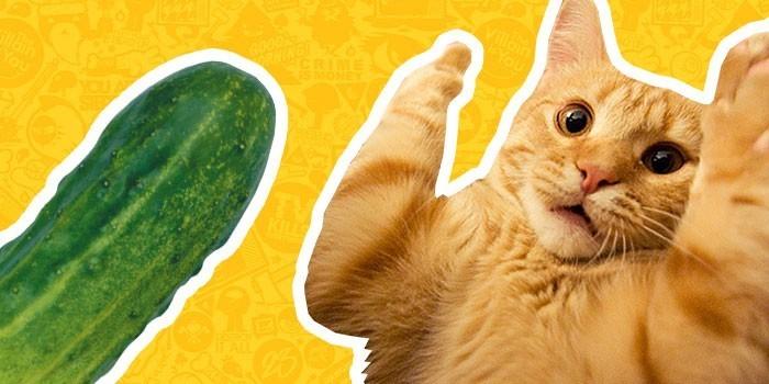 10 лучших видео о животных 2015 года