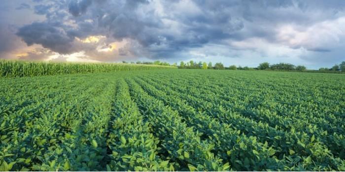 Россия запретит ввозить сою и кукурузу из США