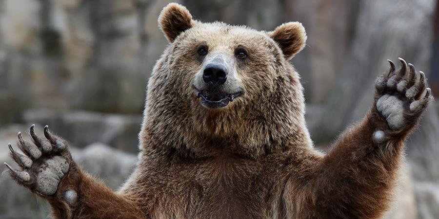В Турции на вышке связи сняли медведя с коробкой на голове