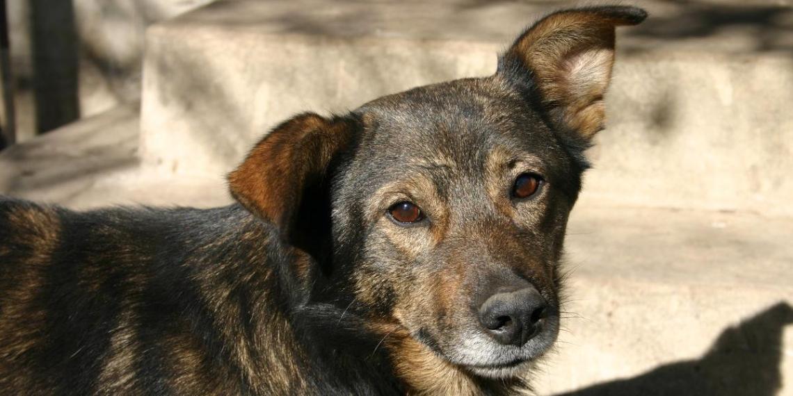 В Госдуме заинтересовались россиянкой, поедавшей собак от бедности