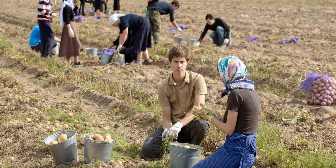 Минсельхоз хочет отправить на картошку студентов вместо мигрантов