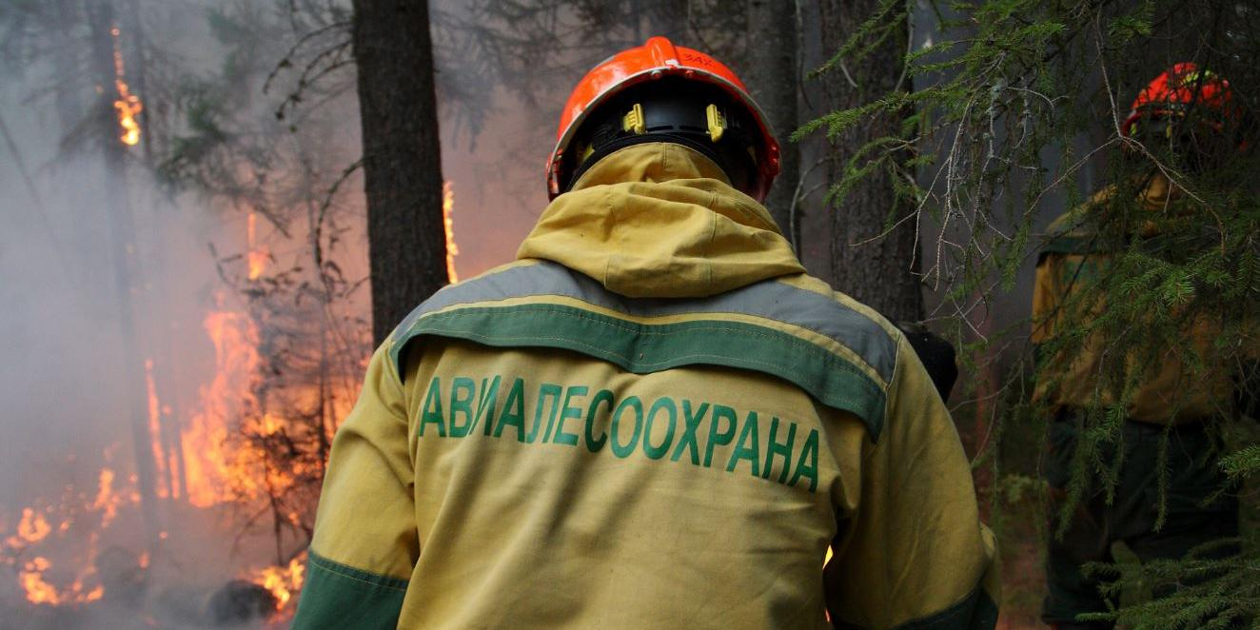 Рослесхоз: дополнительные 8 млрд руб. для лесоохраны позволят увеличить в два раза маршруты наземного патрулирования