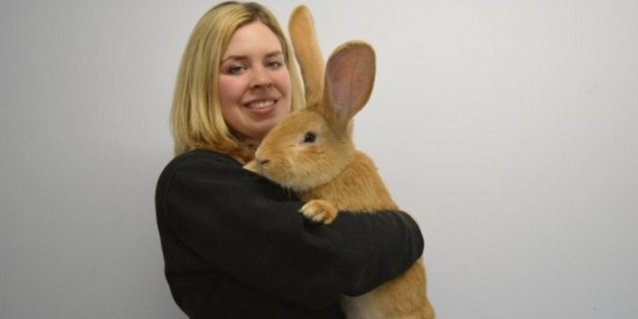В Шотландии подыскивают дом кролику размером с собаку