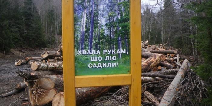 Карпаты облысели: туристы оценили масштабы вырубок леса на Украине