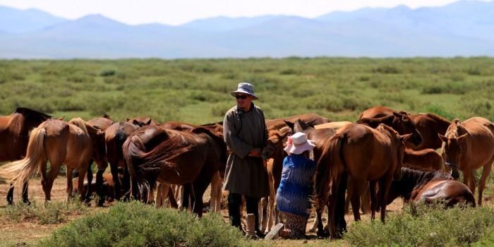 Жители Монголии пожертвовали лошадьми ради выплаты внешнего долга