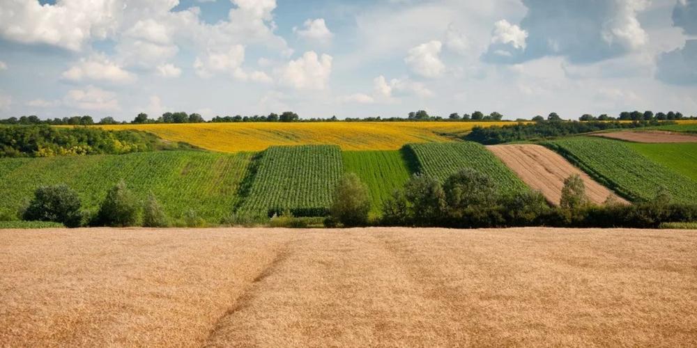 Forbes назвал топ-20 крупнейших землевладельцев России