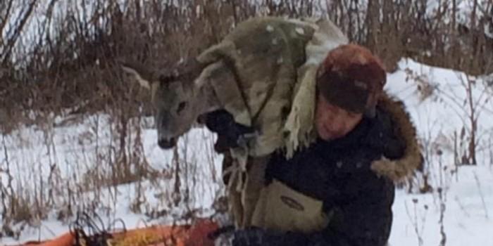 Под Тулой МЧСники 4 часа спасали косулю, вмерзшую в лед