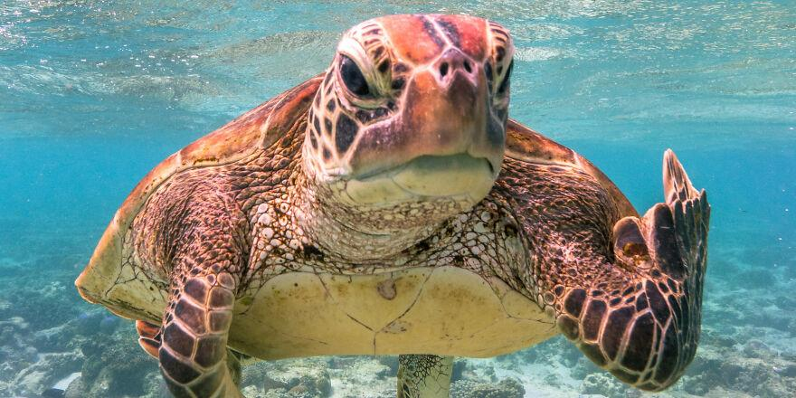 """Черепаха со """"средним пальцем"""" выиграла конкурс комедийной фотографии дикой природы"""