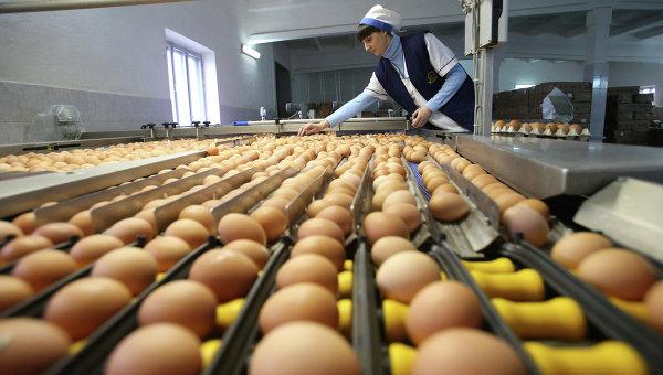 Россия ужесточает требования к поставкам живой птицы и яиц из ФРГ