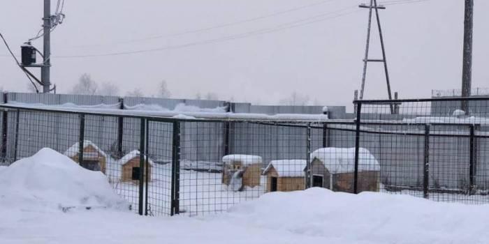 Объяснили обнаружение контейнера в Якутии с десятками трупов животных
