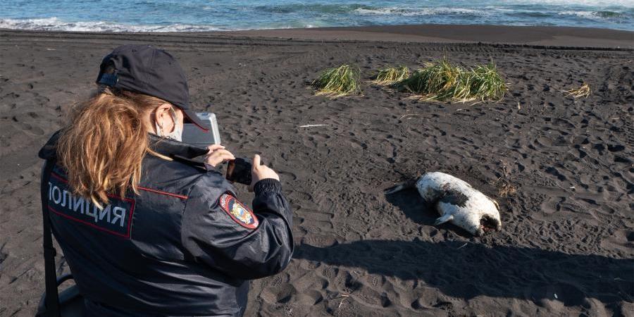 Росприроднадзор расширил зону поиска источника загрязнения океана