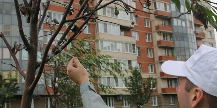 """Ради победы в конкурсе """"Зеленый сад"""" питерские коммунальщики обклеили мертвые деревья скотчем"""