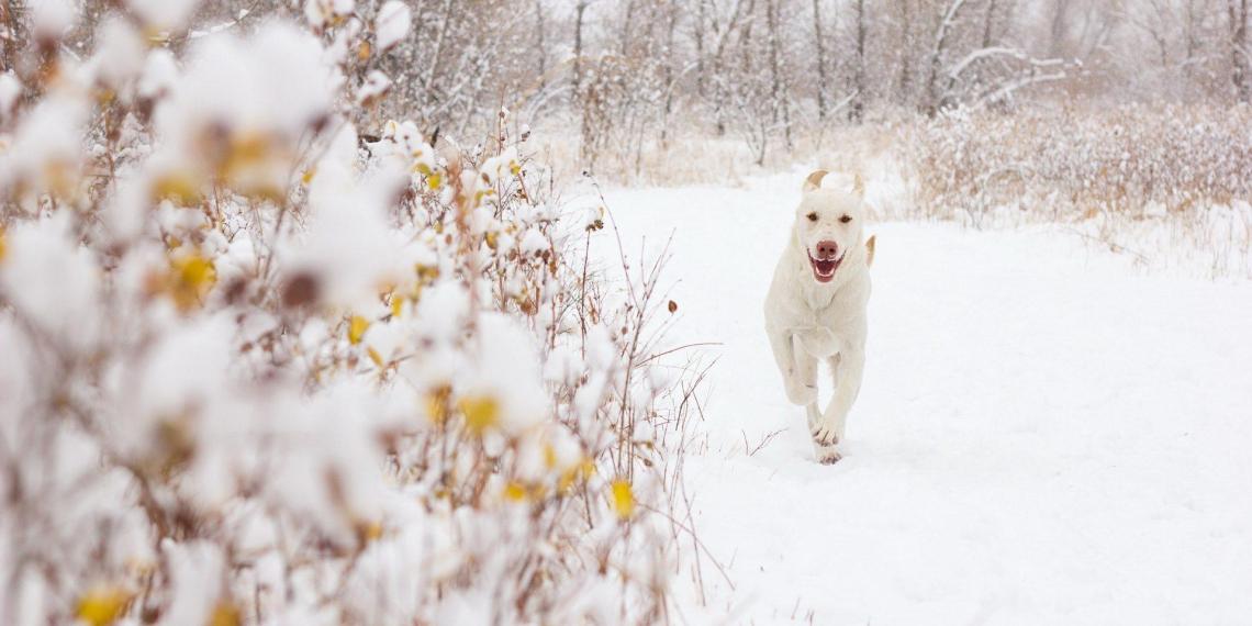 Против кировского депутата возбудили дело за убийство собак