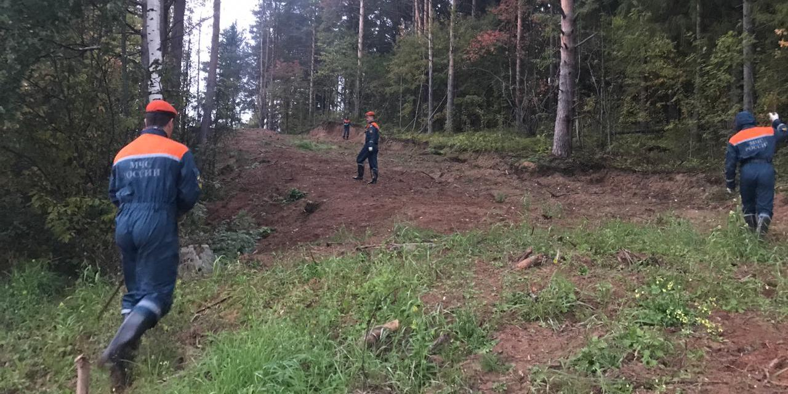 Пропавшую в лесу Вологодчины 2-летнюю девочку нашли живой