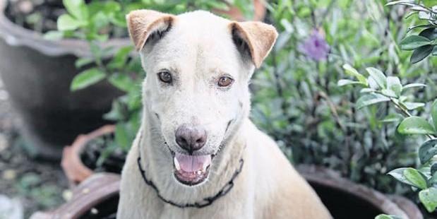 В Таиланде бродячая собака спасла жизнь младенцу