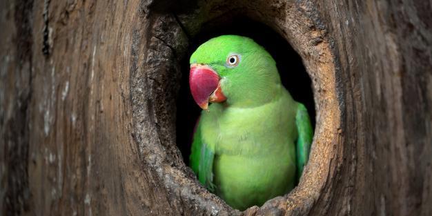 В Австралии говорящий попугай спас хозяина от пожара