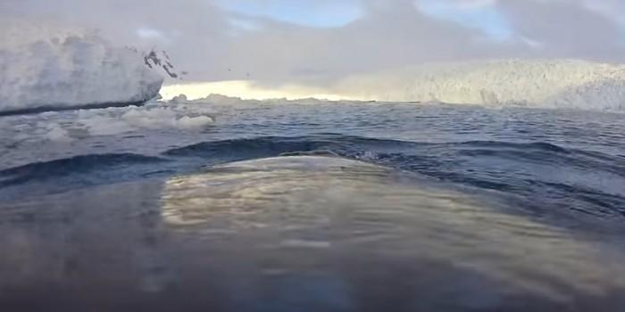 Видео дня: Антарктика глазами кита