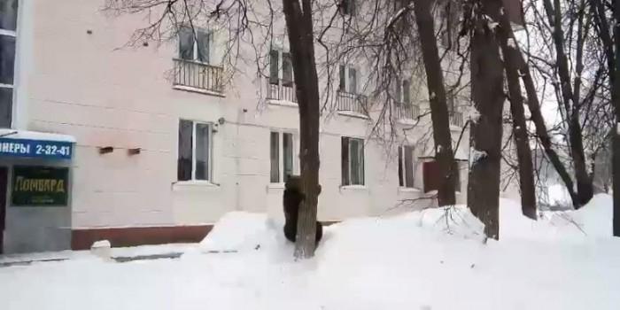 Жители Жигулевска засняли на улицах города медведя на дереве