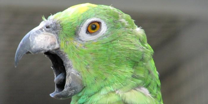 Попугай рассказал хозяйке об измене ее мужа с домработницей