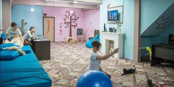 В Иркутске открыли публичный дом для кошек