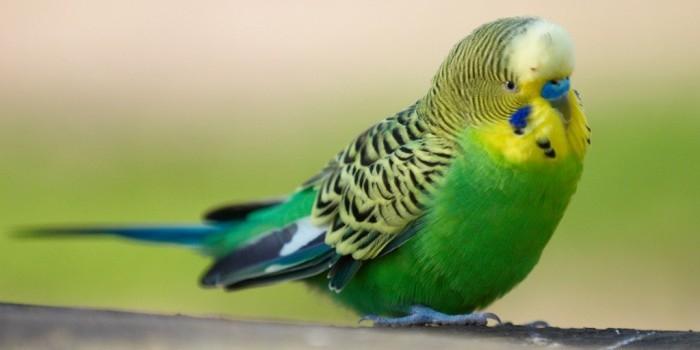 Из-за взрыва в одесском кафе стал заикаться живший в нем попугай