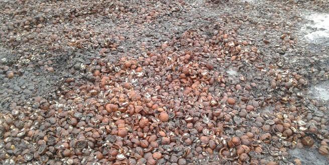 В Новосибирске дорогу отремонтировали грецкими орехами