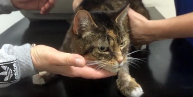 В Британии кошку спасли от верной смерти с помощью водки