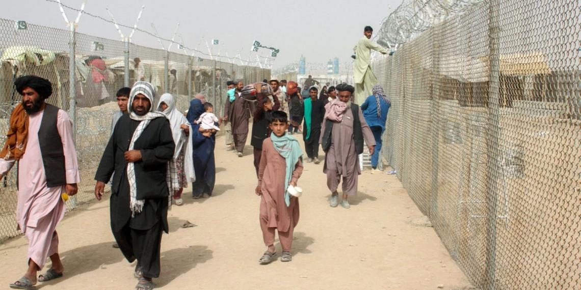 У Зеленского считают, что афганские беженцы гораздо образованнее, чем украинцы