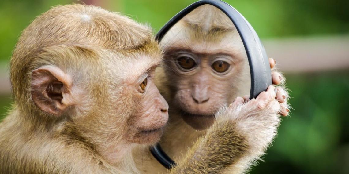 Илон Маск чипировал обезьяну и научил ее играть в видеоигры