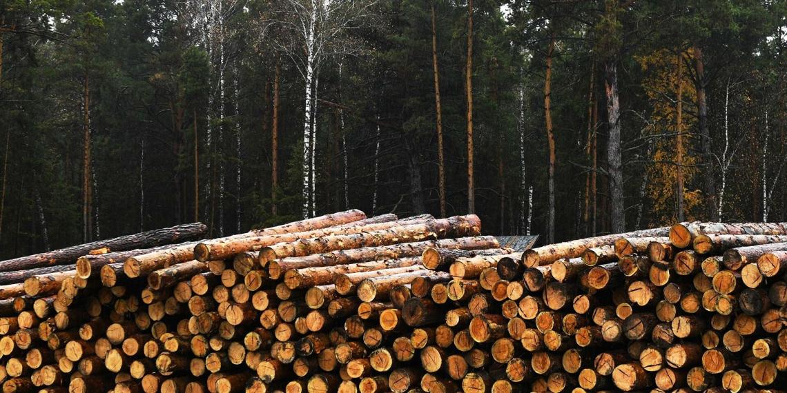 Россия введет ограничения на экспорт древесины