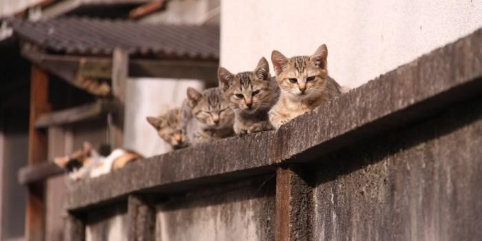 В Германии предложили ввести налог на кошек