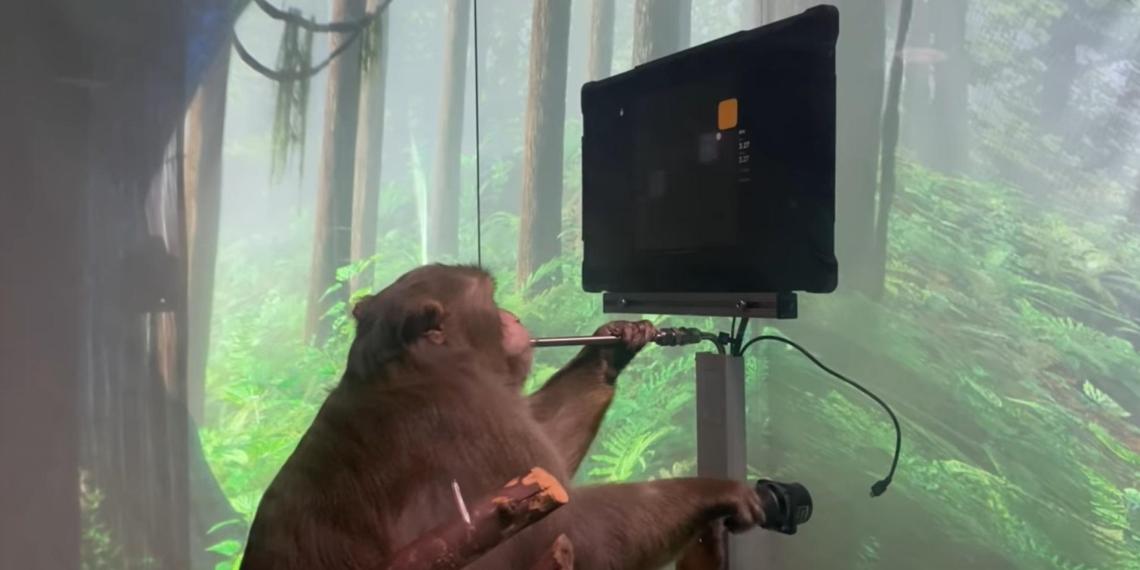 Neuralink Илона Маска научила макаку играть в видеоигры с помощью мысли
