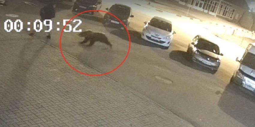Жителя Ярославля в центре города атаковал медведь