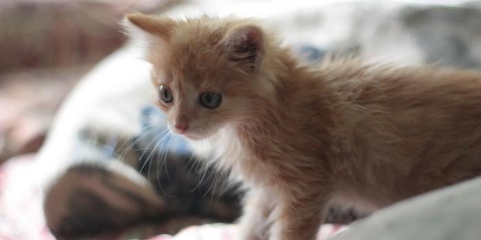 В Новосибирской области подросток зарезал котенка на глазах у детей