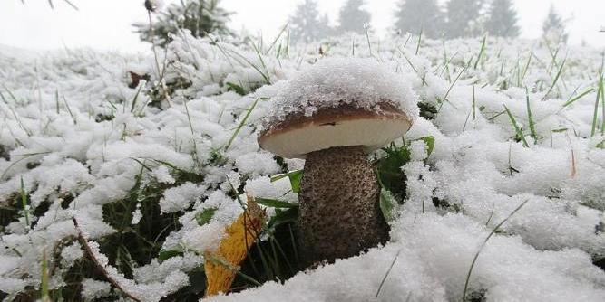 В российских лесах из-за аномально теплой зимы выросли грибы