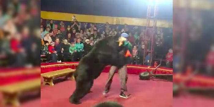В Карелии цирковой медведь напал на дрессировщика на глазах у зрителей