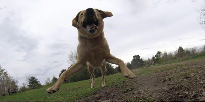 Собака-фотограф по кличке Тула покорила интернет