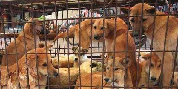 Иркутский бизнесмен наладил торговлю мясом выращенных на ферме псов