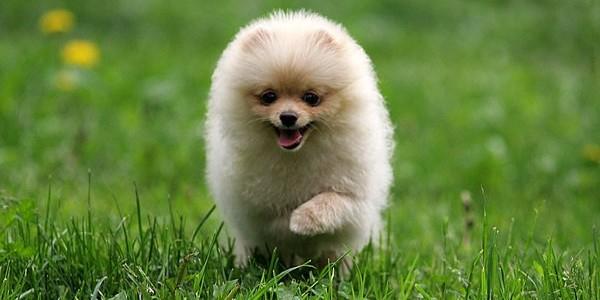 Смешно чихающий щенок стал новым любимцем Сети (ВИДЕО)