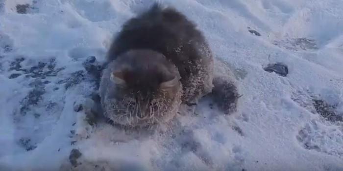 Под Челябинском семейная пара спасла кошку, вмерзшую в лед