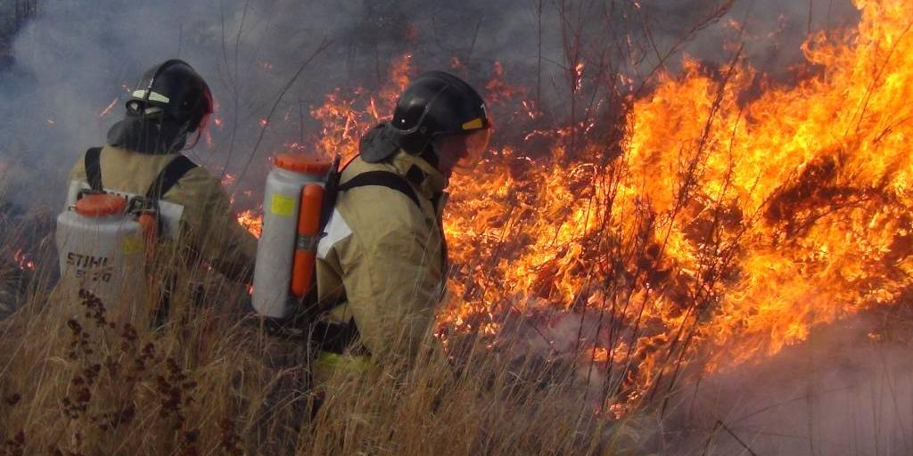 Красноярские чиновники отказались тушить лесные пожары из-за высоких затрат